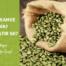 Yeşil Kahve Nedir Yeşil Kahve Zayıflatırmı