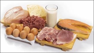 Temel Proteinler